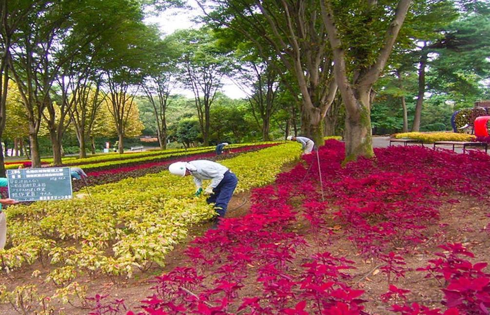国営武蔵丘陵森林公園地区植物管理